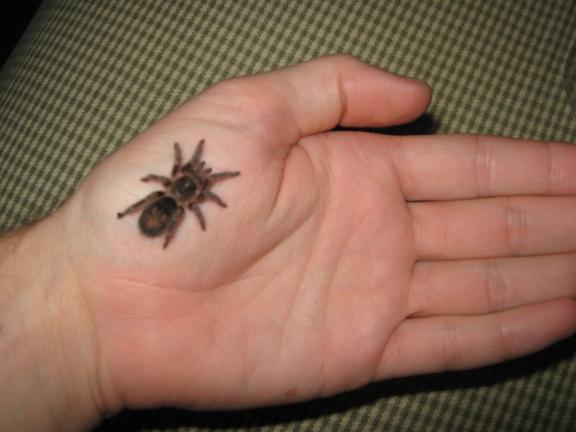 Spider in Hand